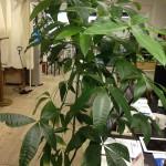 五反田コワーキング 観葉植物